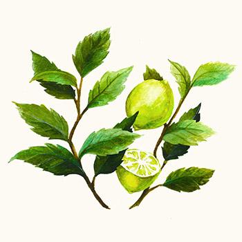 Watercolour Illustration