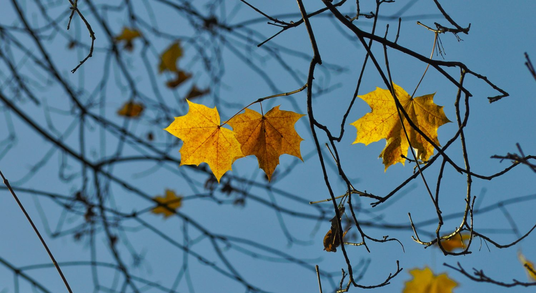Leaf Banner